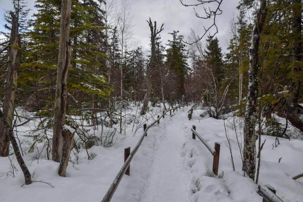 Stapfen durch das tiefverschneite Hohlohmoor