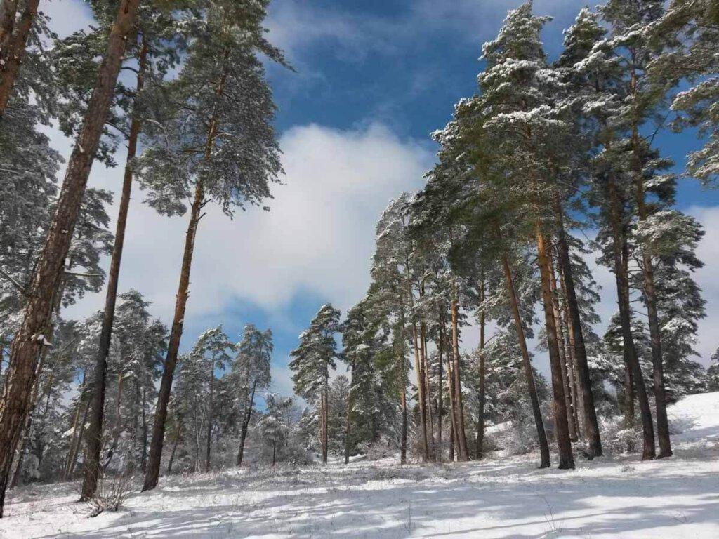 Winterwanderungen im märchenhaft verschneiten Schwarzwald