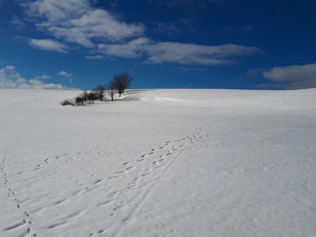 Winter-Mikroabenteuer mit Kindern: Spurenlesen im Schnee