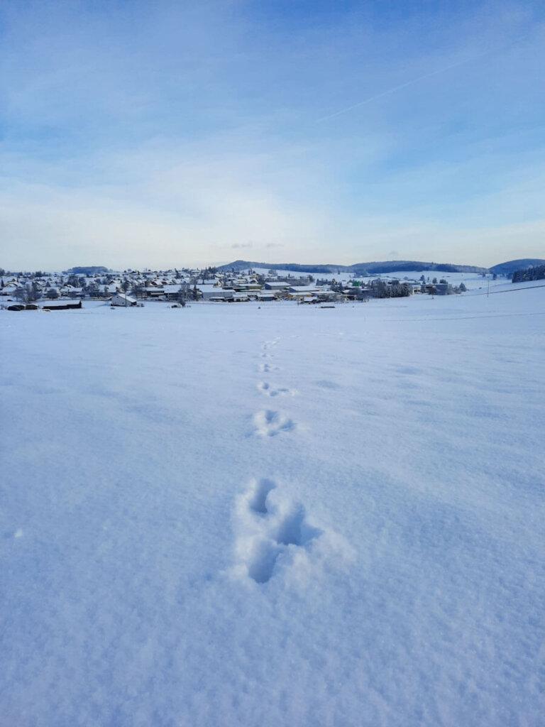 Spurenlesen mit Kindern im Schnee