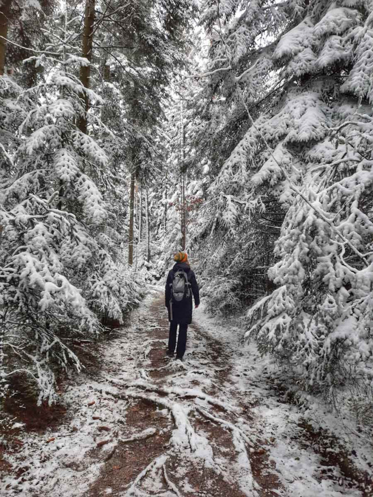 Winterspaziergang im tiefverschneiten Wald