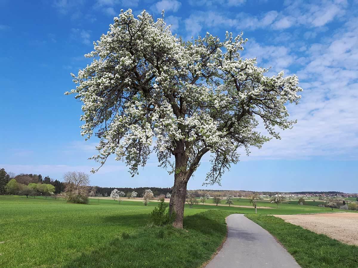 Die schönsten Ausflugsziele Deutschlands im Frühling