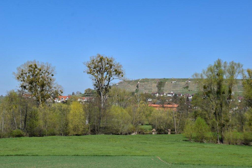 Grünes Paradies: Naturschutzgebiet Enzaue Roßwag