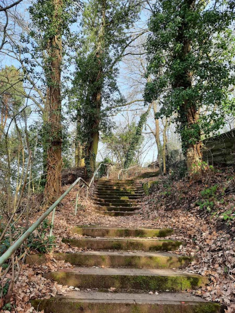 Bergauf geht es auf dem Drei Burgen Weg in Pforzheim zurück zur Ruine Hoheneck