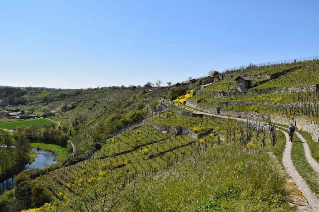 Weinwandern in den Felsengärten hoch über der Enzschleife Mühlhausen