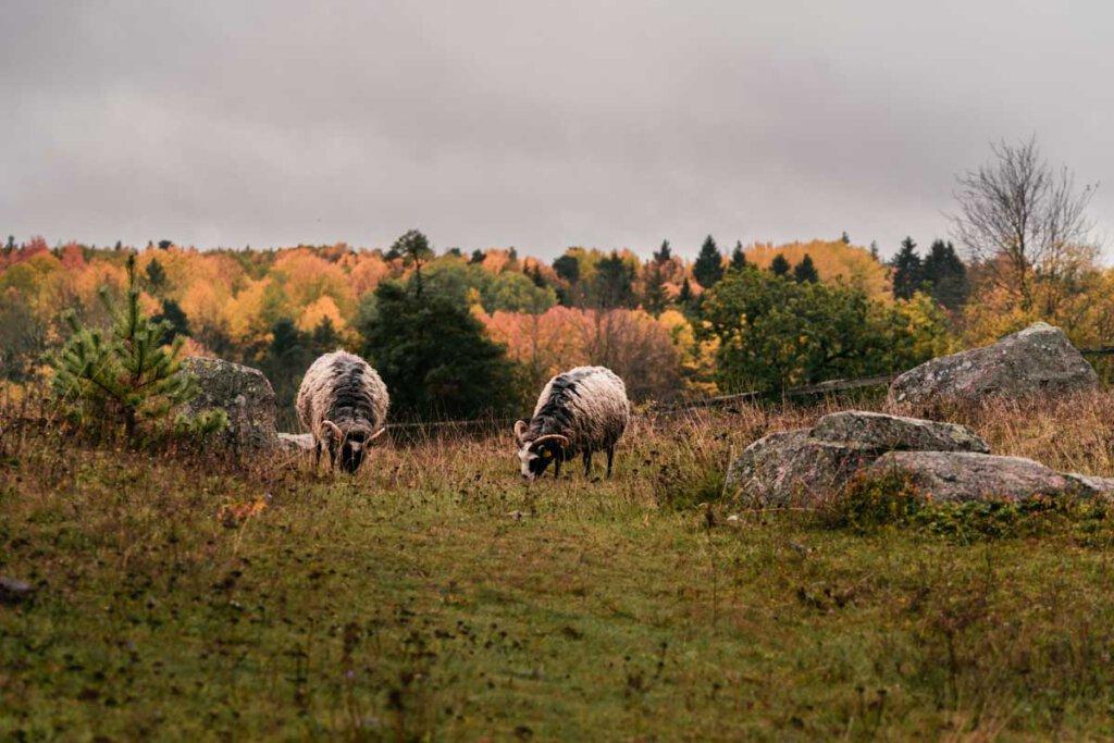 Kung Björns Hög - einer von Schwedens ältesten Grabhügeln aus der Bronzezeit