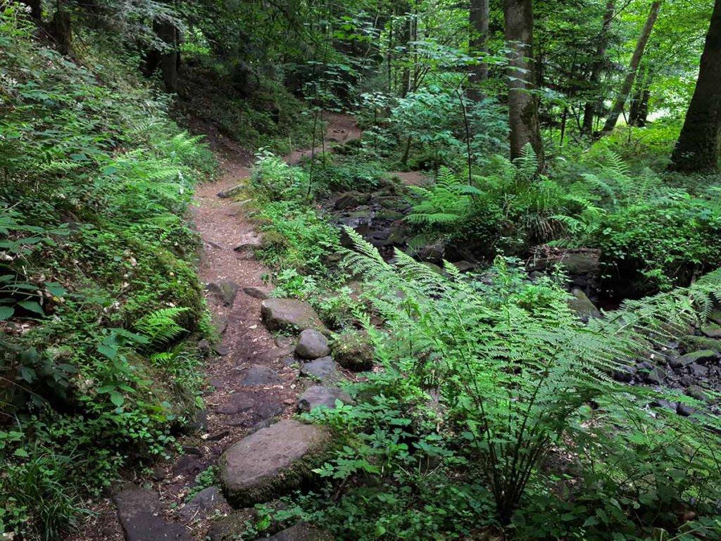 Wandern Nordschwarzwald durch das Schweinbachtal bei Calw