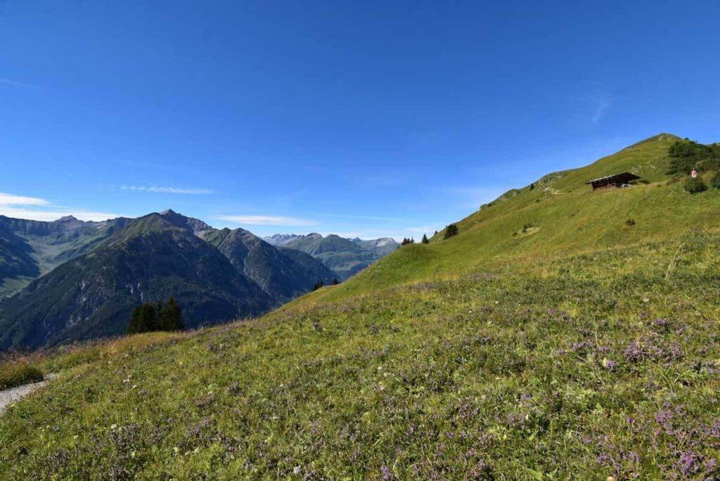 Wildblumenwiesen auf dem Botanischen Lehrpfad Jöchelspitze im Tiroler Lechtal