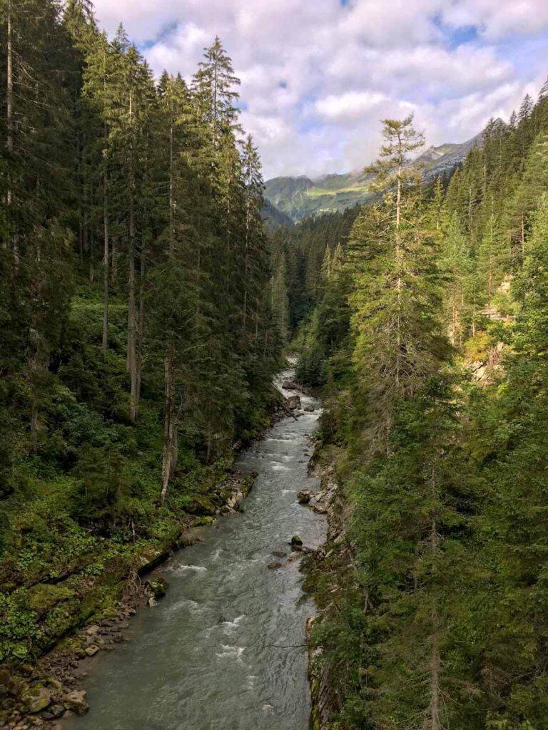 Die Wälder des österreichischen Lechtals - fast so wild wie in Kanada