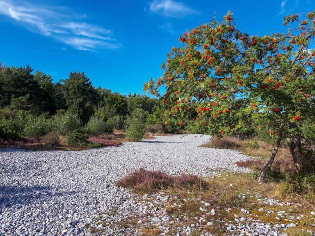 Ein erster Hauch von Herbst in den Feuersteinfeldern der Schmalen Heide Rügen