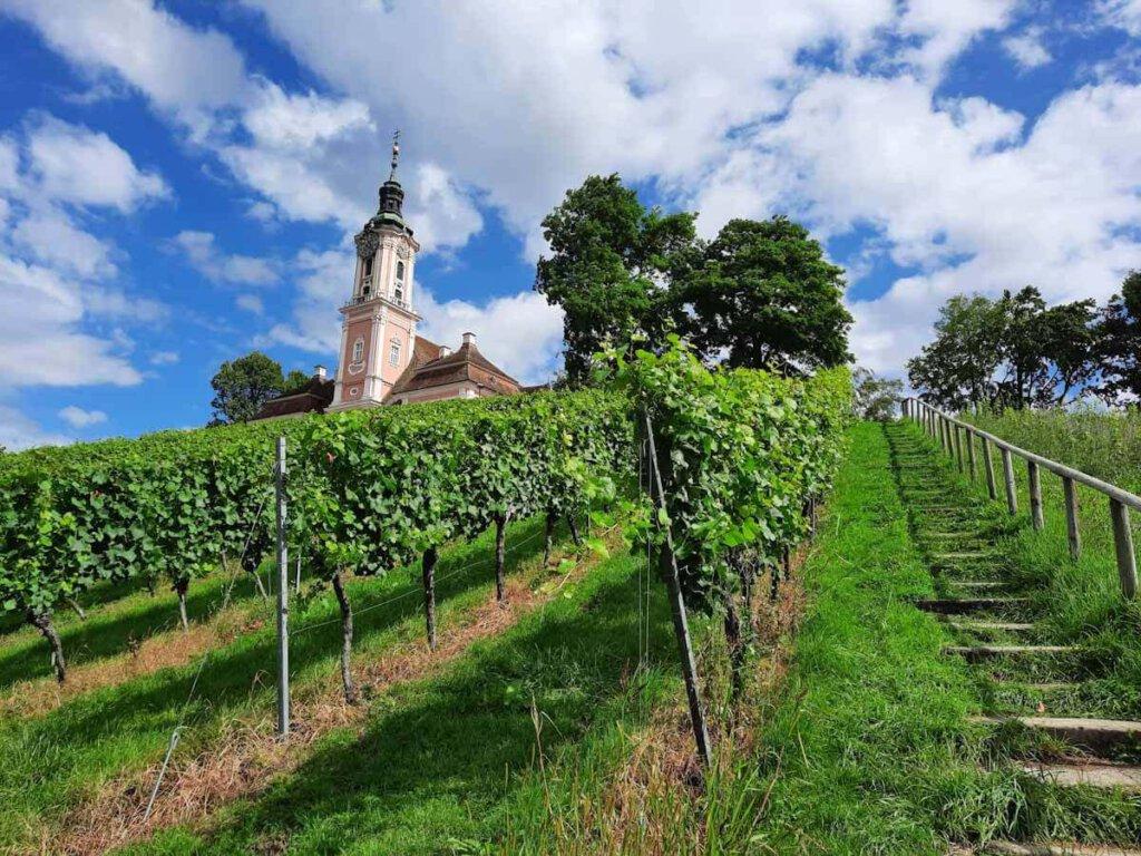 Die Wein- und Barockwanderung am Bodensee führt zur Birnau