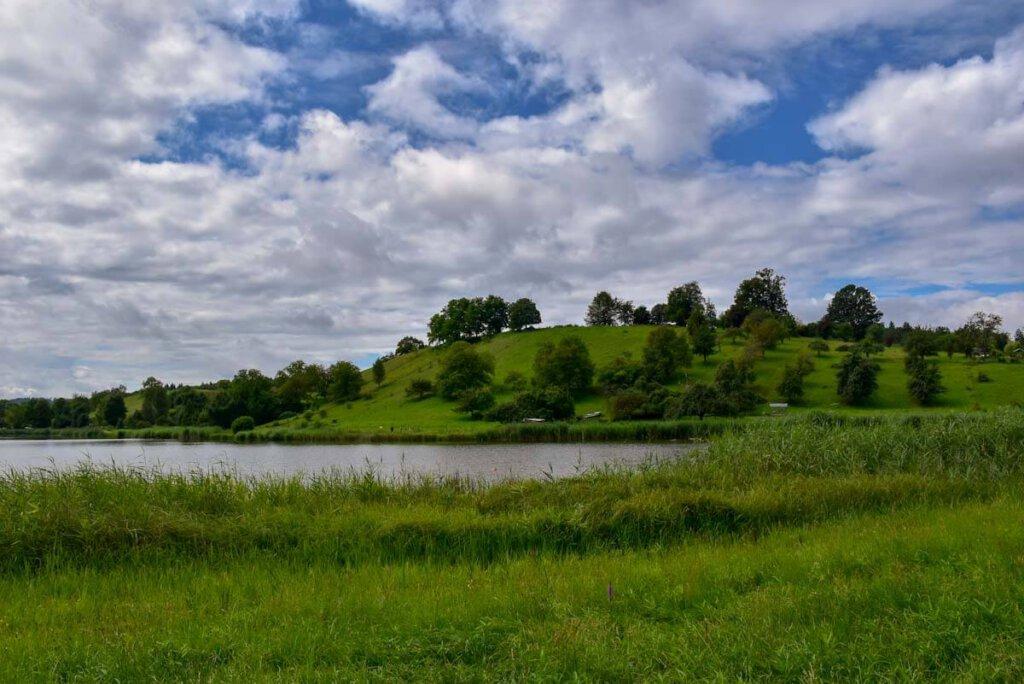 Der Salemer Klosterweiher Bifangweiher ist ein grünes Paradies