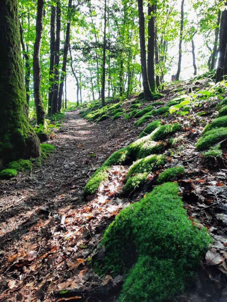 Herrliche Waldpfade auf Etappe 12 des Eifelsteigs