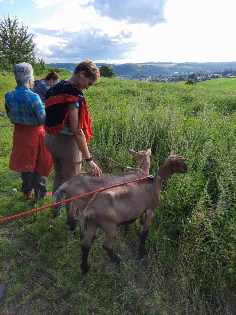 Ziegenwanderung mit dem Vulkanhof entlang des Pulvermaars in der Vulkaneifel