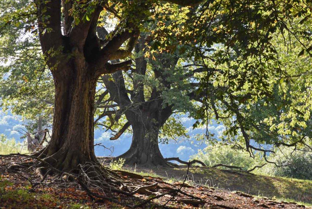 Magisch schöner Herbstwald im Biosphärengebiet Schwäbische Alb bei Bissingen