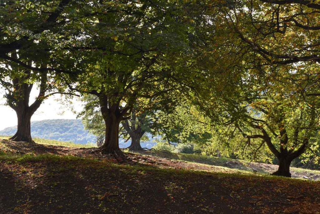 Herbstliche Wälder im Biosphärengebiet Schwäbische Alb
