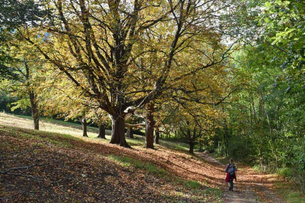Wandern auf der Schwäbischen Alb ist im Goldenen Herbst märchenhaft schön
